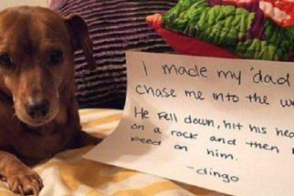 Fotos: Veja 10 cãezinhos que 'sacanearam' seus tutores