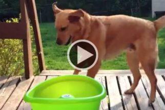 Cão mostra que para se divertir com brinquedo não precisa de ninguém