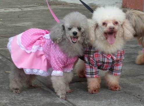 casal-canino-junino