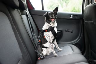 Cães: Equipamentos adequados para passear com segurança