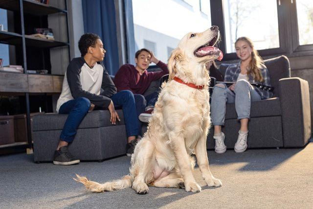 Como fazer do seu cão um pet elegante. Ensine alguns truques