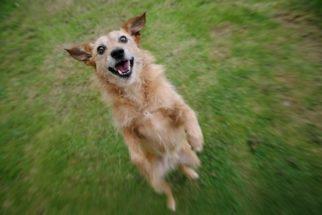 Confira truques superinteligentes para os cães