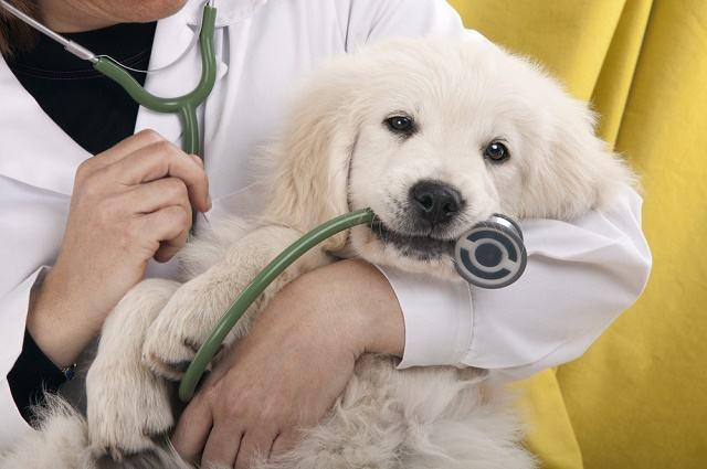 É possível contratar seguros de saúde para cachorros?