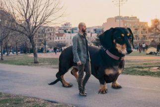 Tutor cria ensaio de cadela usando efeito que a faz parecer gigante