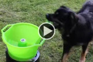 Empresa cria aparelho de arremesso de bolas para cães