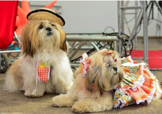 Os cuidados necessários com os cães durante as festas de São João