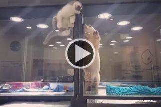 Gato foge de vitrine de pet shop para brincar com cão