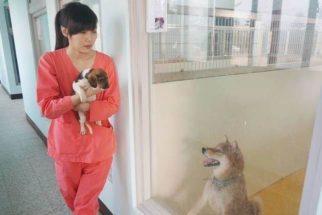 Veterinária comete suicídio por remorso após eutanásia em 700 cães