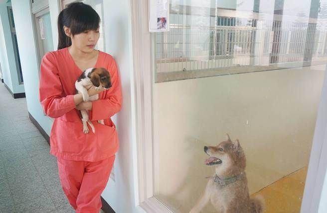 veterinaria-se-suicida-apos-criticas-por-procedimentos-de-eutanasia