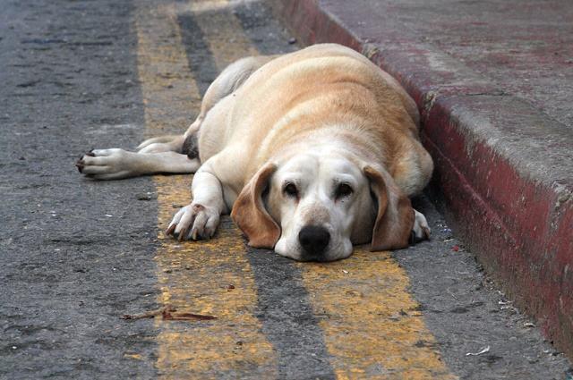 Imagem de cão deitado em rua