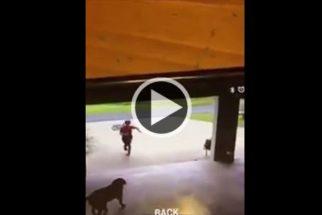 Inusitado: Garoto invade garagem de casa e 'rouba' abraço de cadela