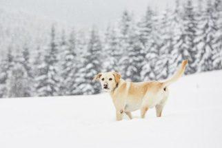 Sugestões de nomes de cães inspirados no inverno