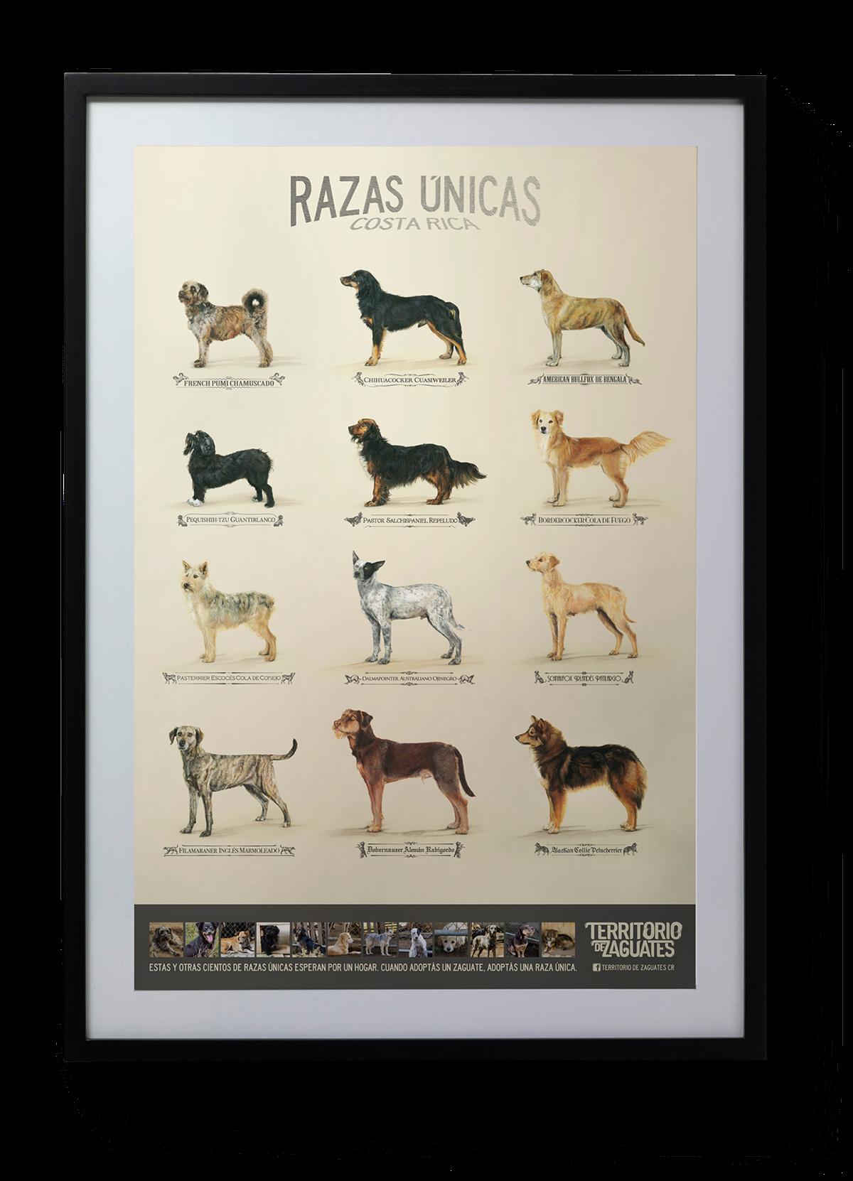 raças-unicas-de-cachorro-viralatas