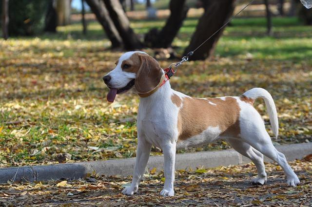 racas-de-cachorros-que-se-modificam-intensamente-quando-crescem