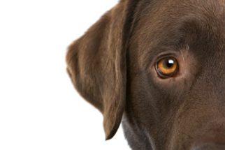 Saiba como descobrir se o seu animal está com problemas na visão