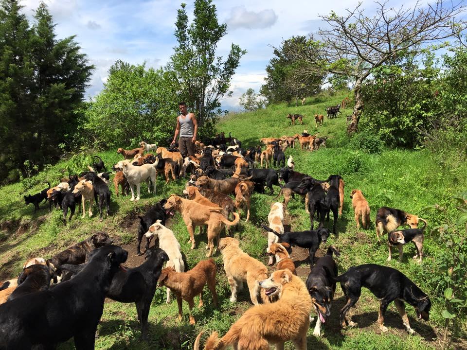 territorio-de-zaguates-canil-com-novecentos-cachorros-na-costa-rica