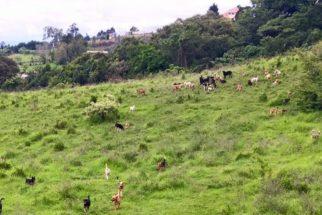 Santuário na Costa Rica abriga mais de 900 cães vira-latas