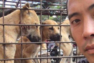 Ativista salva mil cães de festival chinês que iria sacrificá-los