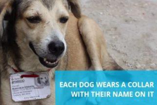 Cuba determina que instituições públicas adotem os cães de rua