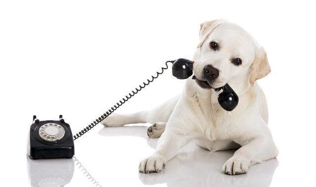 Acredite: Tecnologia ensina cães a falar. Saiba mais sobre o assunto