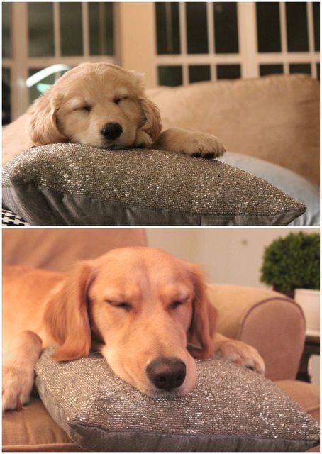 almofada-mostra-a-diferença-de-cao-de-um-ano-para-outro