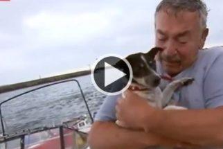 Após acidente de barco, pescador tem reencontro emocionante com seu cão