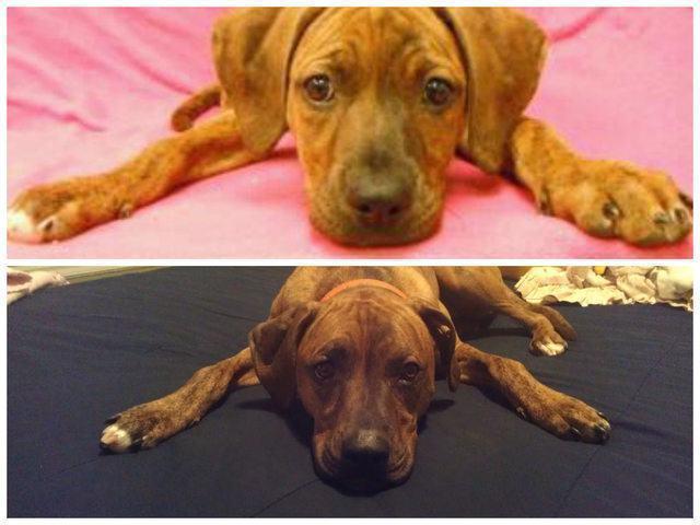 apos-dois-anos-orelhas-de-cadela-parecem-ter-encolhido
