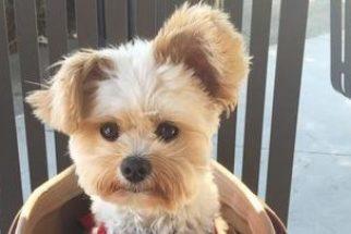 Após ser tirado das ruas, cãozinho vira celebridade no Instagram
