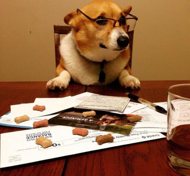 cachorro-contador-administrador
