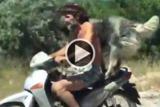 Cachorro é flagrado pegando 'carona' na garupa de moto