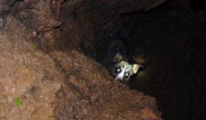 cachorro-preso-em-buraco-de-dez-metros-de-profundidade