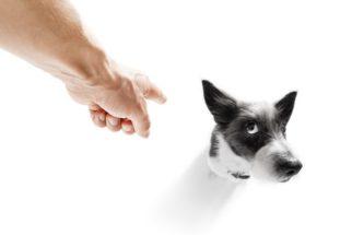 Conheça os efeitos nocivos da punição agressiva