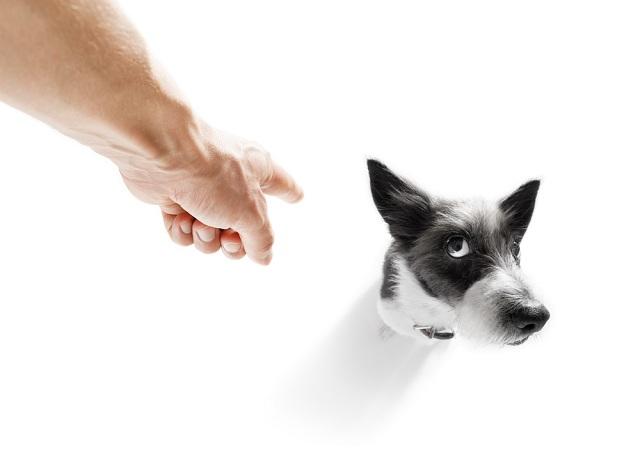 Um dos efeitos nocivos da punição agressiva em cães é ver o tutor como ameaça
