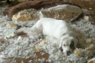Hilário: 8 cãezinhos considerados verdadeiros 'criminosos'