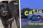 cachorro-que-participa-de-campanha-catioro-go