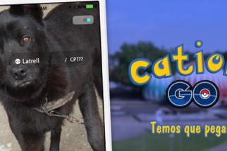 Campanha para adoção de cães inspirada em 'Pokémon Go' cria o 'Catioro Go'