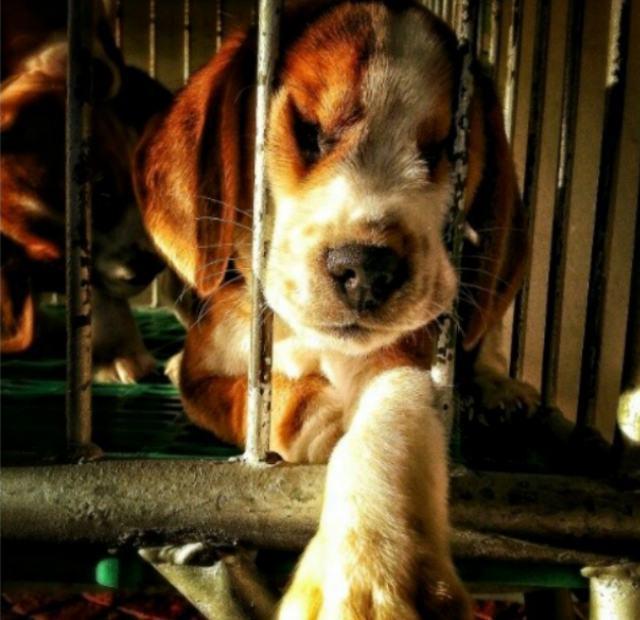cachorro-tentando-fugir-de-jaula