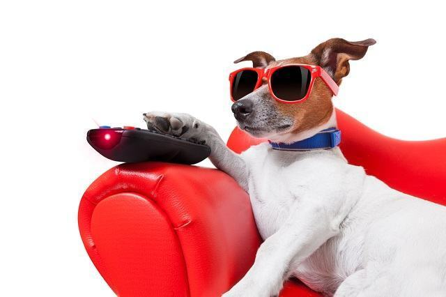Cachorros podem apresentar sedentarismo?