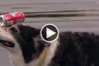 Cadela equilibra lata de refrigerante por 100 metros e bate recorde mundial