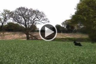 Contagiante: Cadela não esconde alegria ao ser solta em plantação rural e pula sem parar