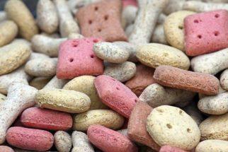 Cachorros podem comer ração para gatos?