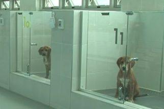 Clínica sul-coreana realiza clonagem de cães por 100 mil dólares