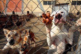 Como podemos ajudar os abrigos de cães?