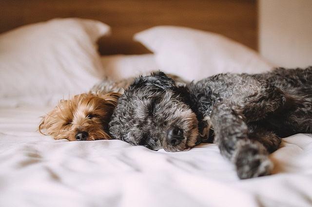 Dicas para fazer seu cão dormir tranquilo toda a noite