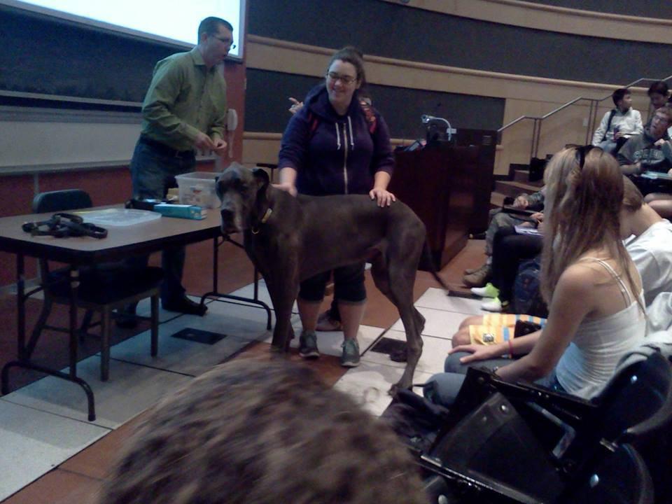 cão-entre-alunos-assistindo-aula