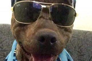 Conheça Frederico, o cão brasileiro mais estiloso do Facebook