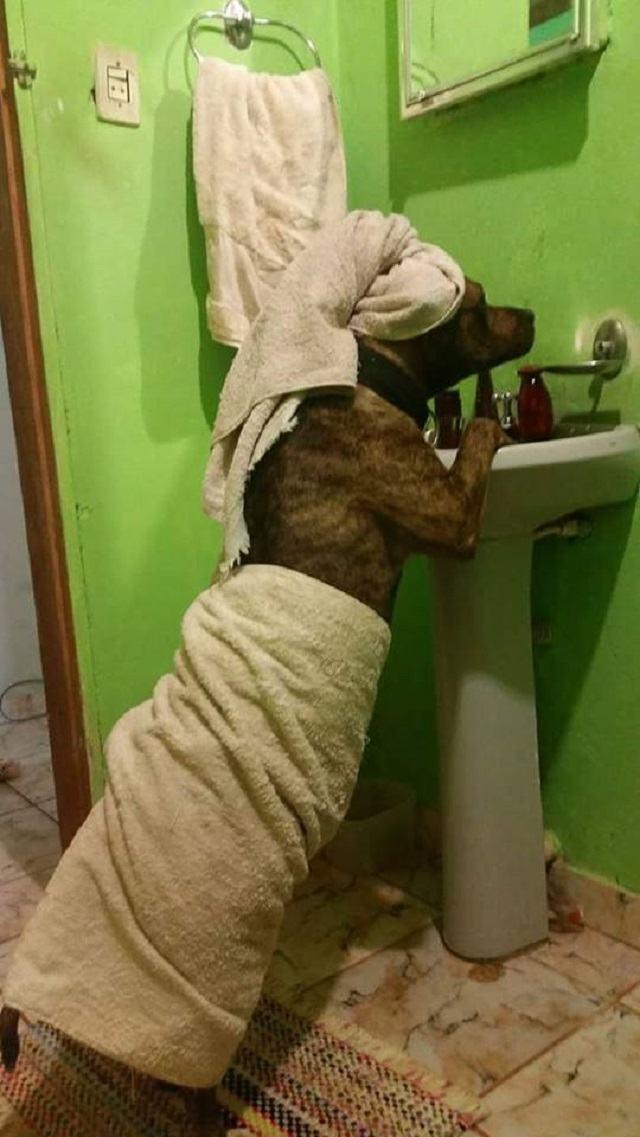 frederico-enrolado-em-toalha-após-banho