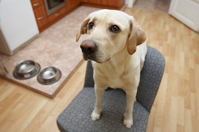 Iniciativa visa mapear animais domésticos em região do DF