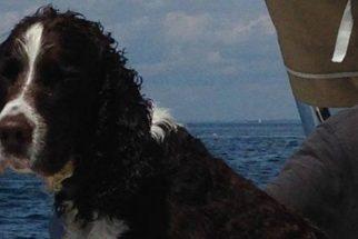 Após cair no mar, cadela é resgatada por pescador de lagosta
