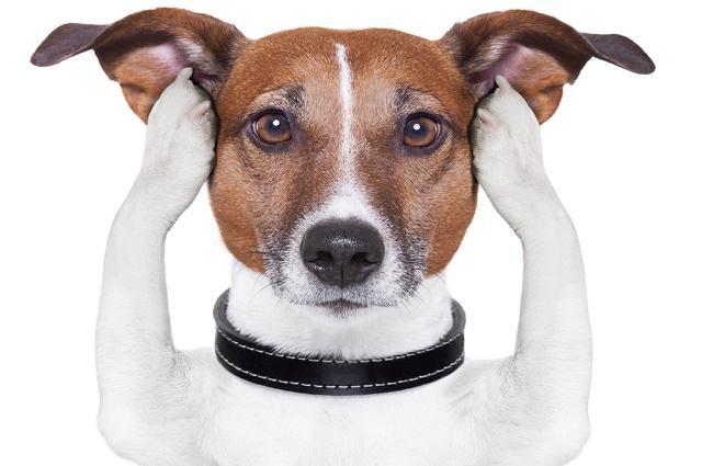 Medicamento ajudará a tratar cães portadores de fobia a barulhos